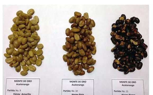 用这种处理方法加工的咖啡豆酸度要比自然水洗法略高一些,但比水洗法